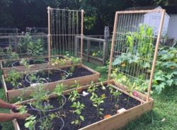 The Children's SchoolHouse Celebrates Gardening