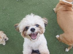 Help Pet Paradise with Holiday Pet Food Donations!